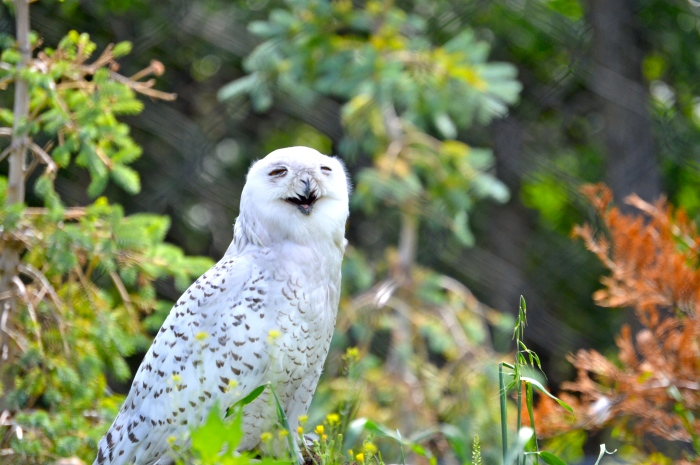 DUDE. Just what type of plants did they put in with the Snowy Owls?